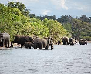 Elephants Chobe river