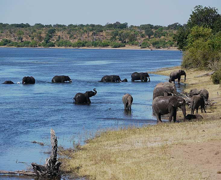 Chobe-river-eles