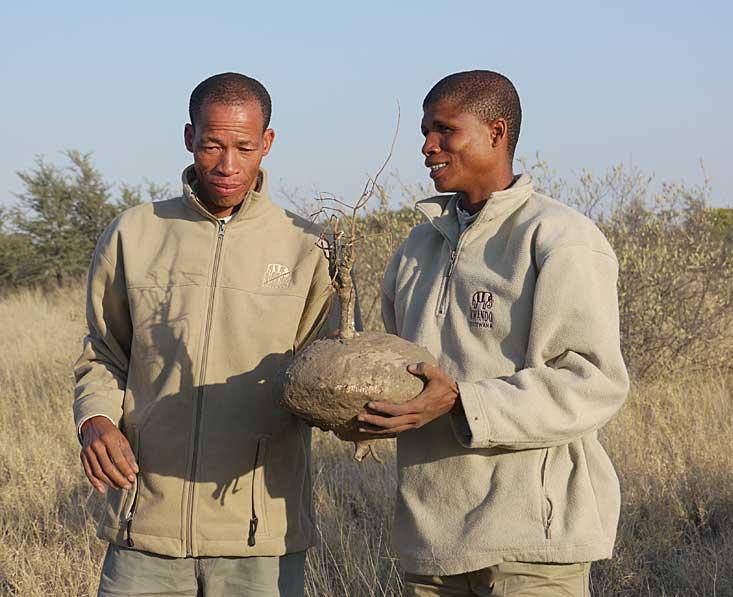 Kalahari-bushmen