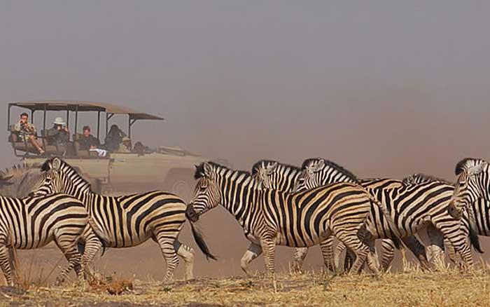 Linyanti-bushcamp-zebra
