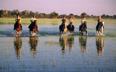 Okavango Delta Horse Riding