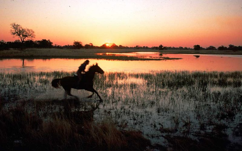 horse riding in the Okavango Delta