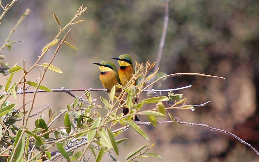 birding-in-botswana