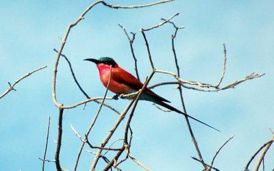Botswana Birding Safaris