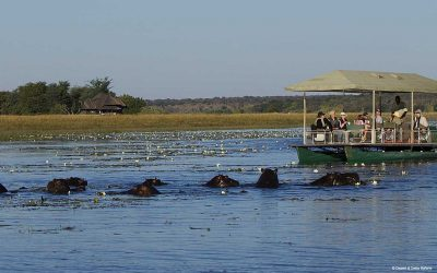 Chobe River Boat Safari
