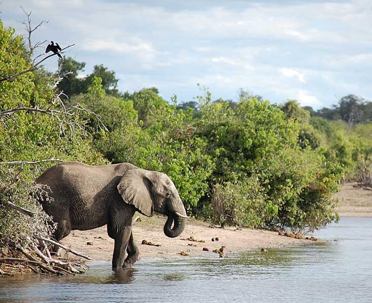 chode-river-elephant1