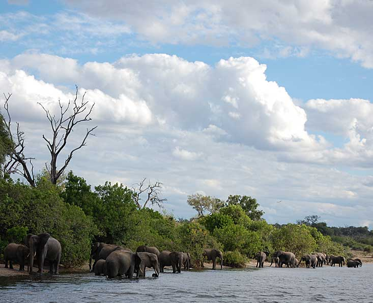 chode-river-elephants