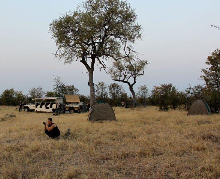 Lion-safari10