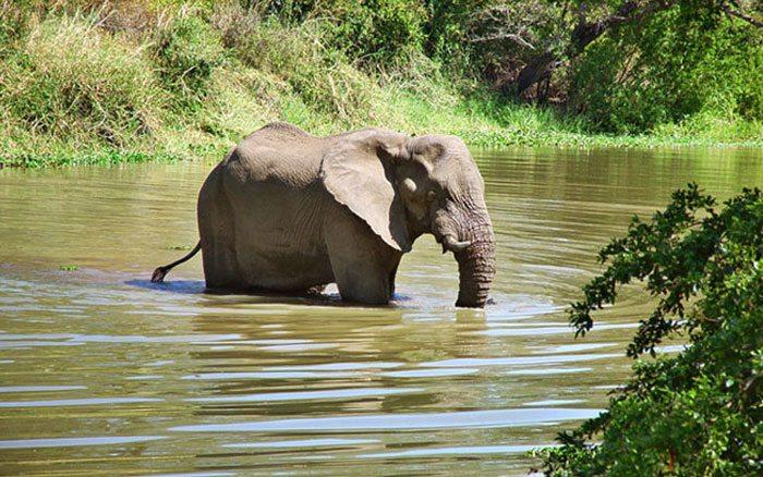 Maramba-rlodge-elephant