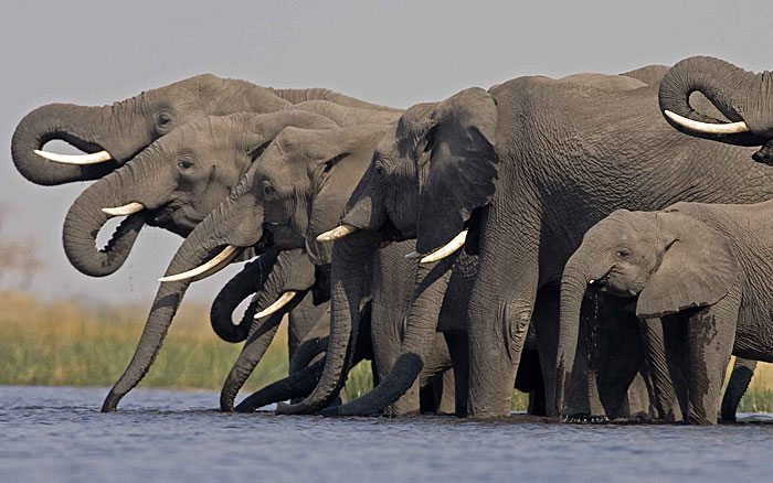 Selinda-Camp-elephants
