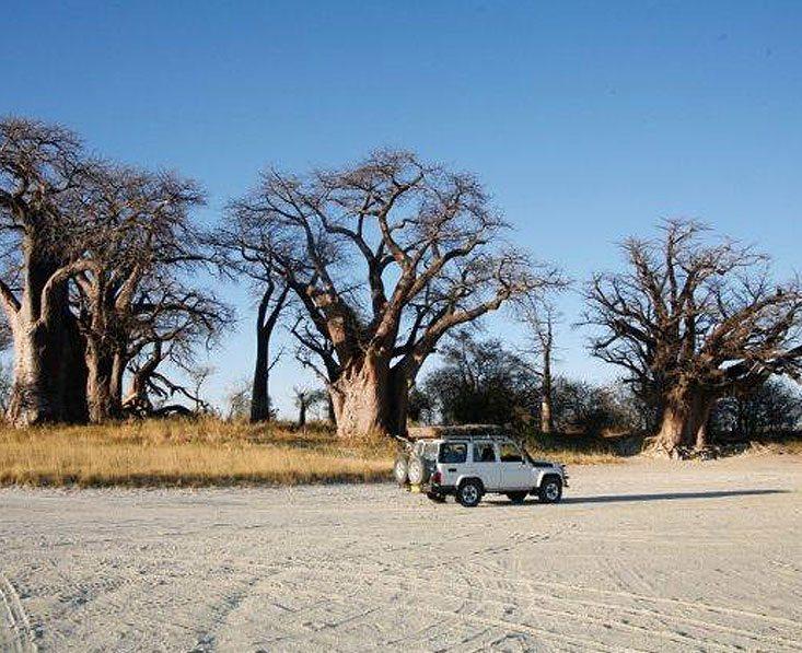 Botswana self-drive safari
