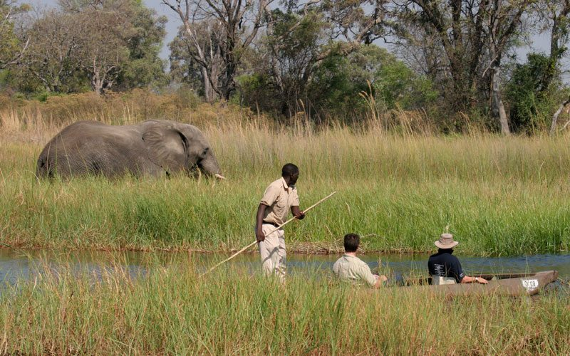 Elephant viewing will in mokoro