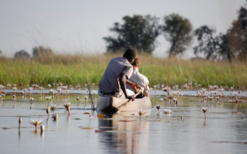 Mokoro in delta Birdwatching
