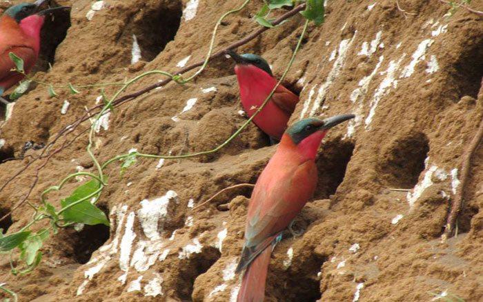 Xaro-lodge-birds
