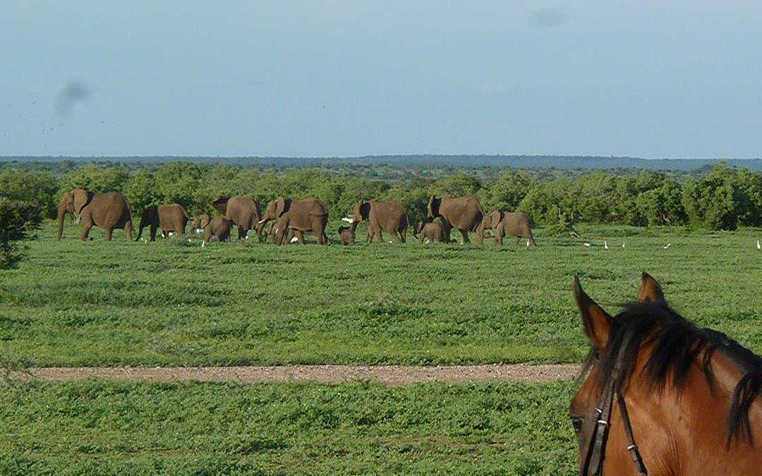 Horse safari - Elephants