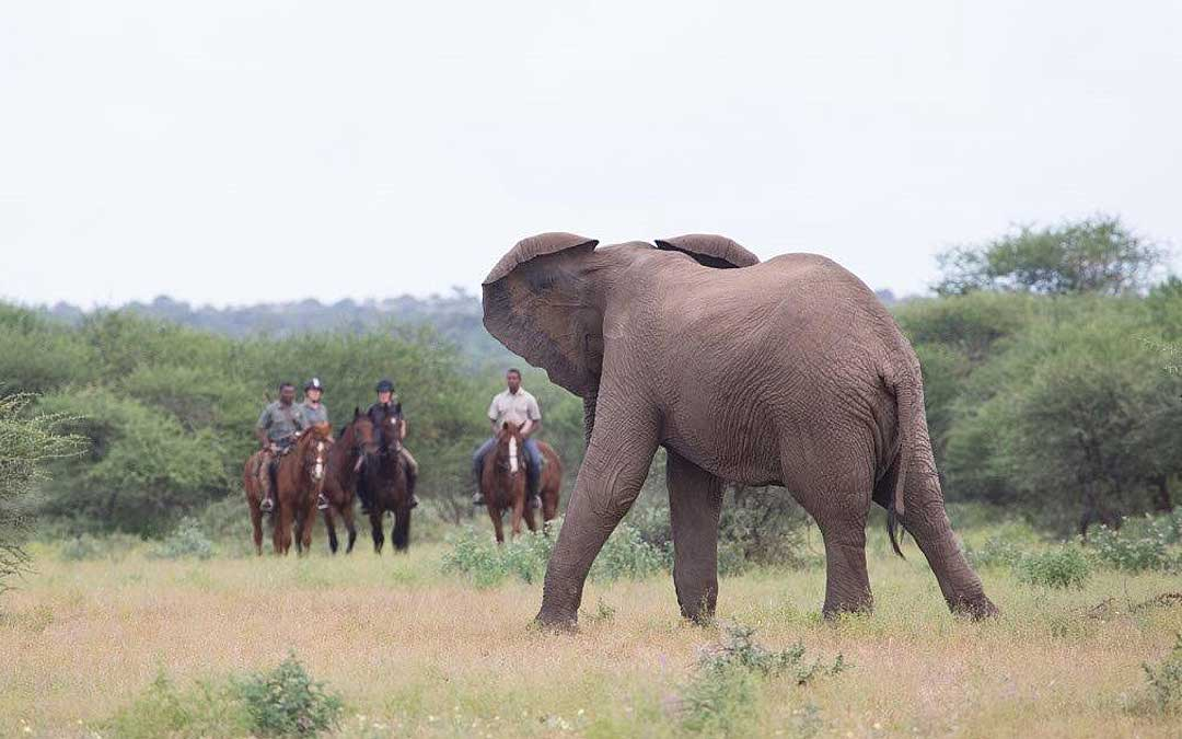 Horse safari - Elephant
