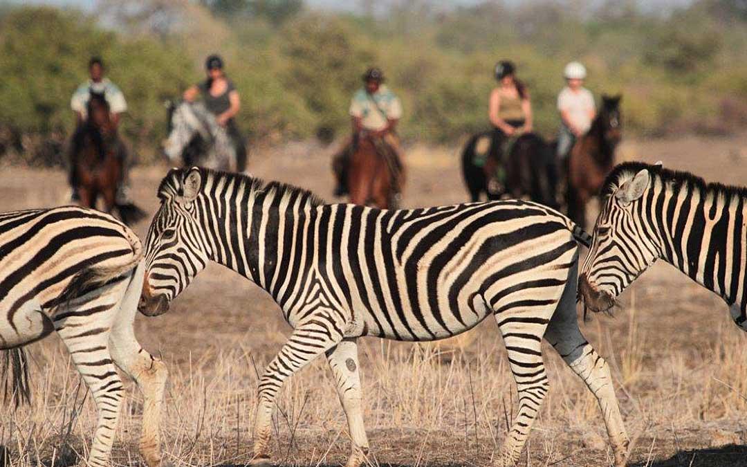 limpopo-horse-safaris-4