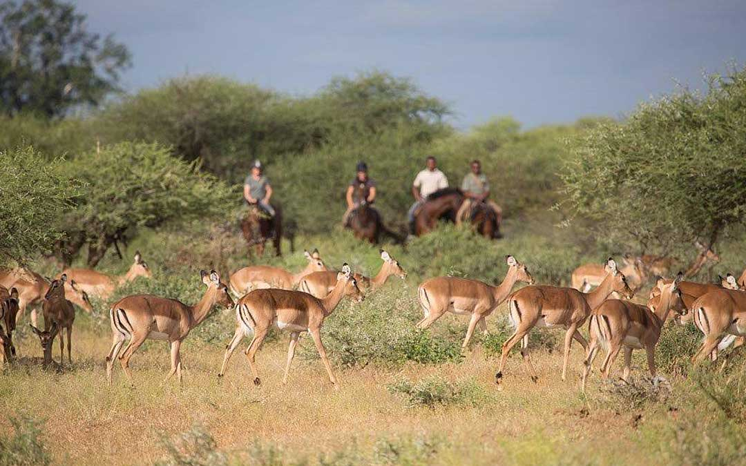 limpopo-horse-safaris-6