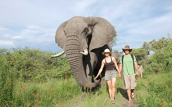 stanleys-elephant-walk