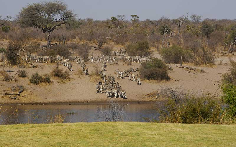 zebra-migration-1