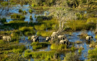 March in the Okavango Delta