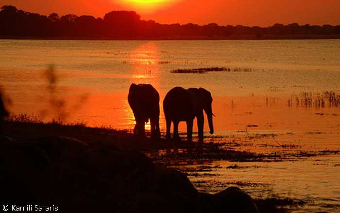 Elephants sunset river