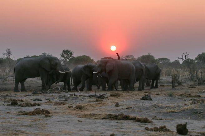 G17-elephants