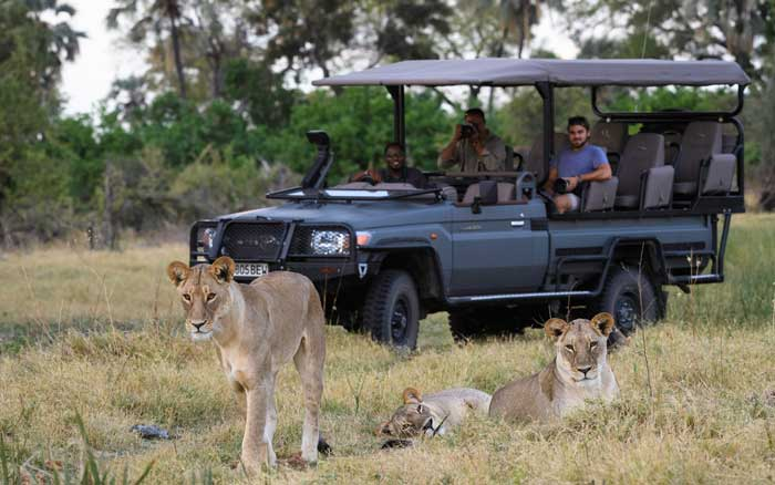 Qorokwe-Camp-game-drive