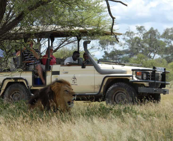 Lion viewing on game drive
