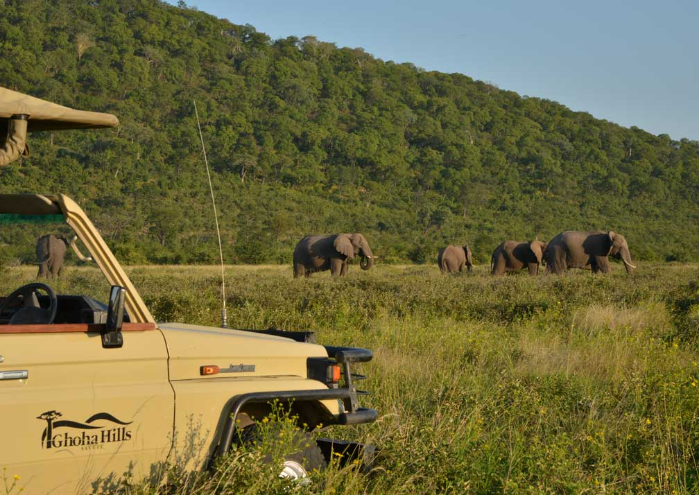 Ghoha Hills Savuti Lodge elephant safari