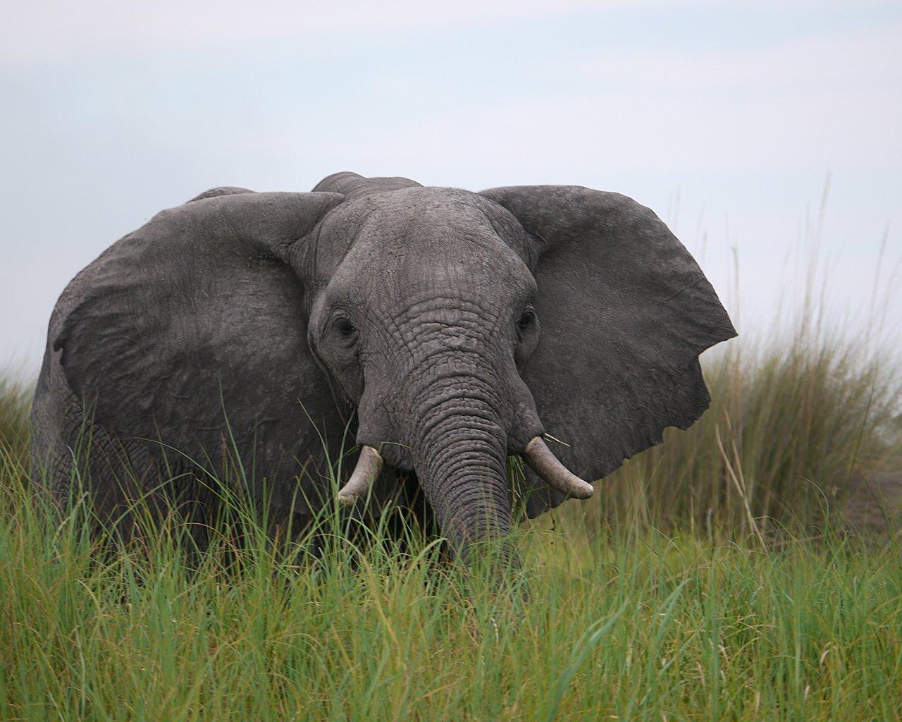 Okavango-G19-2