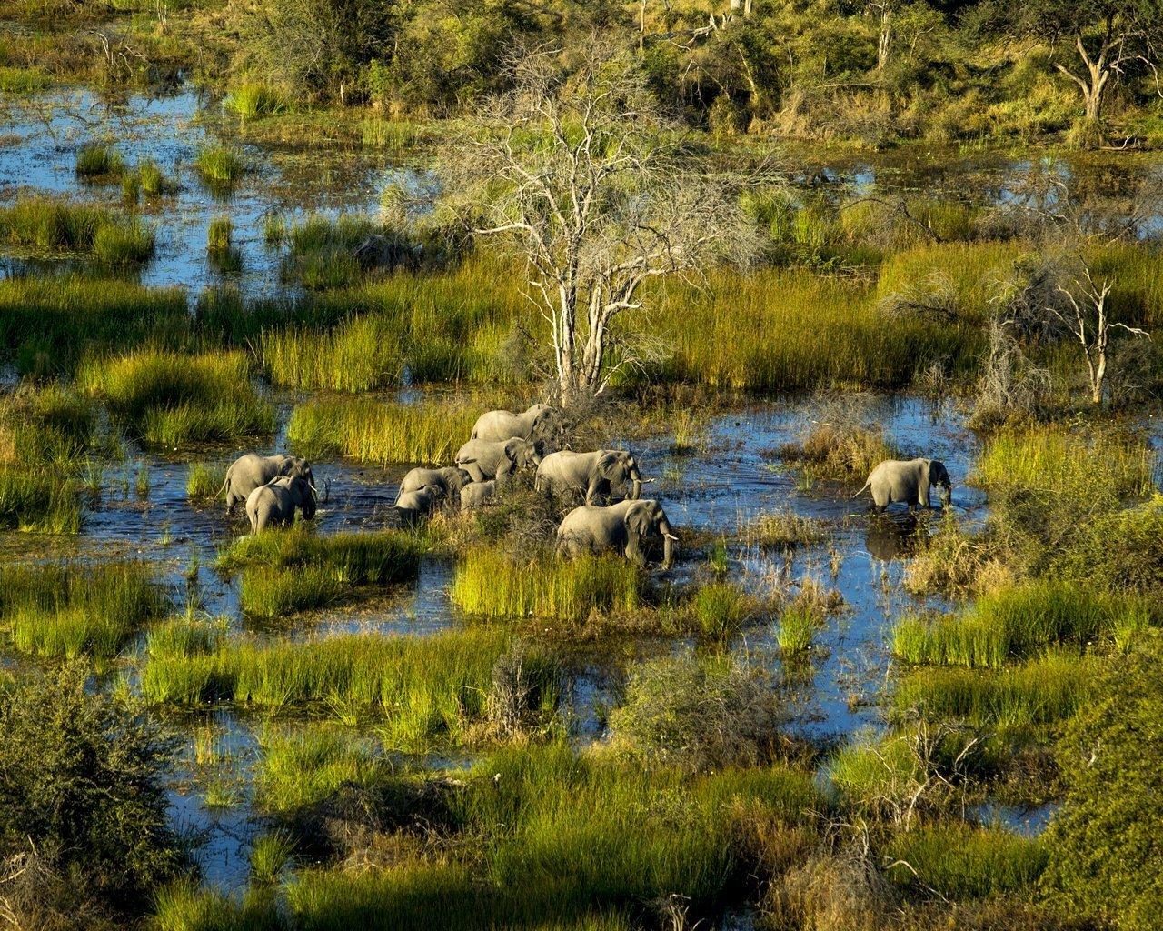 Okavango-G19-6