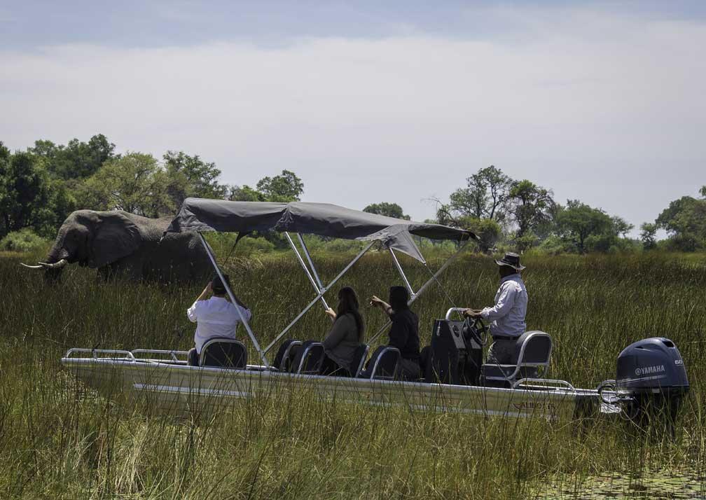 Boat safari viewing elephant