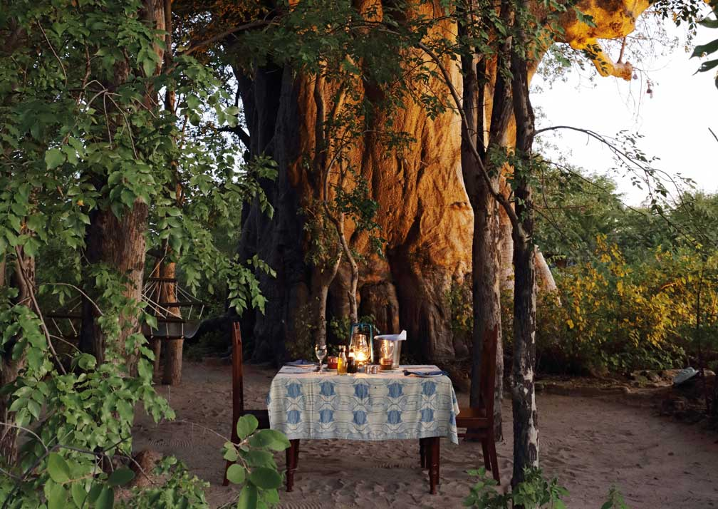 Planet Baobab outdoor dining