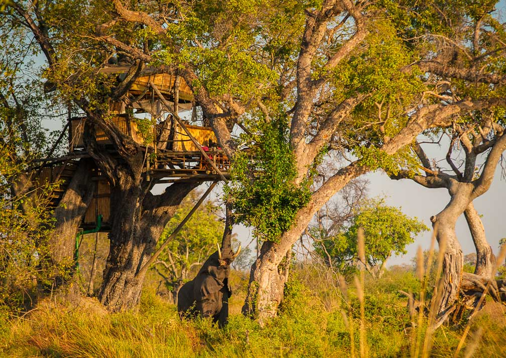 Delta Camp tree-house and elephant