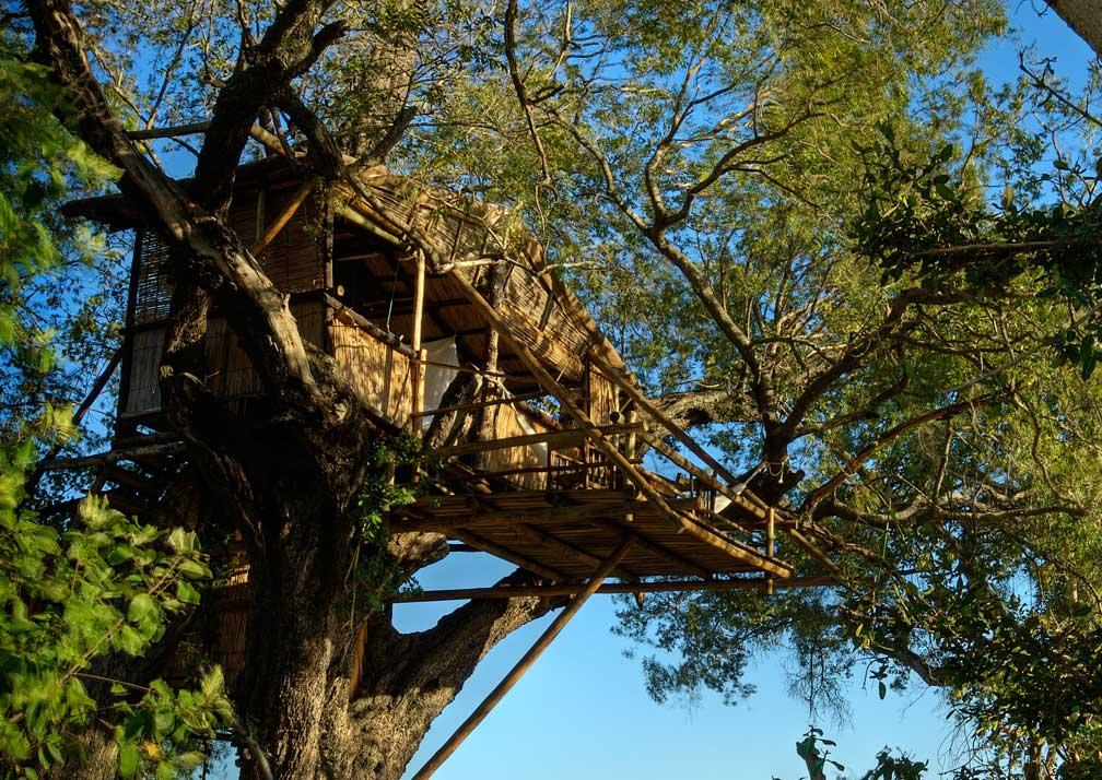 Delta Camp tree-house