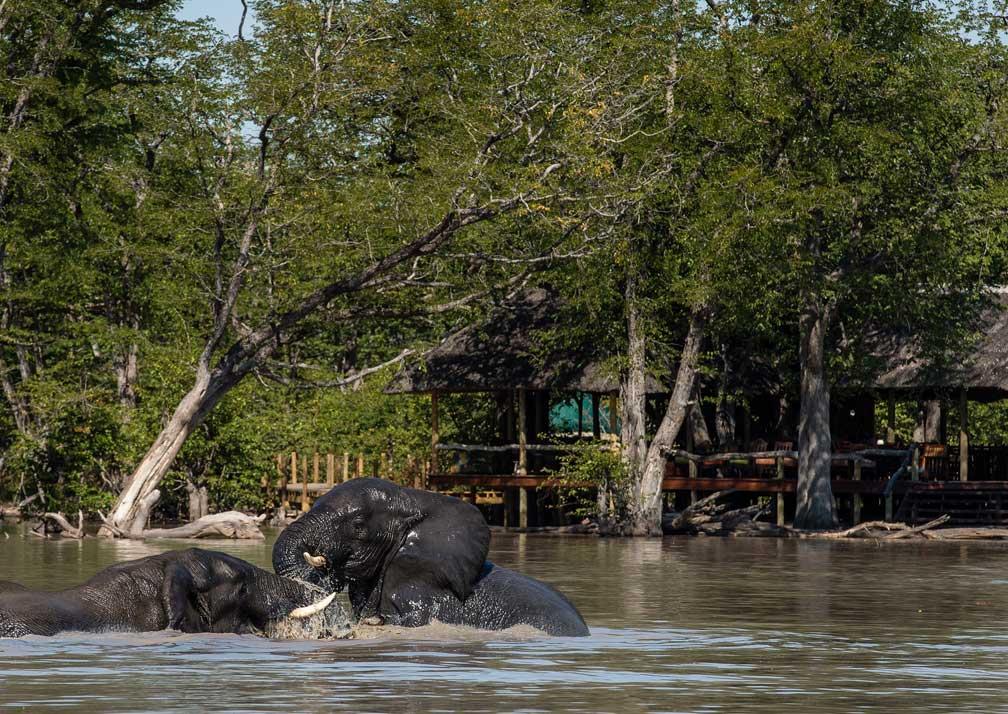 Hyena Pan elephant in water outside cabins
