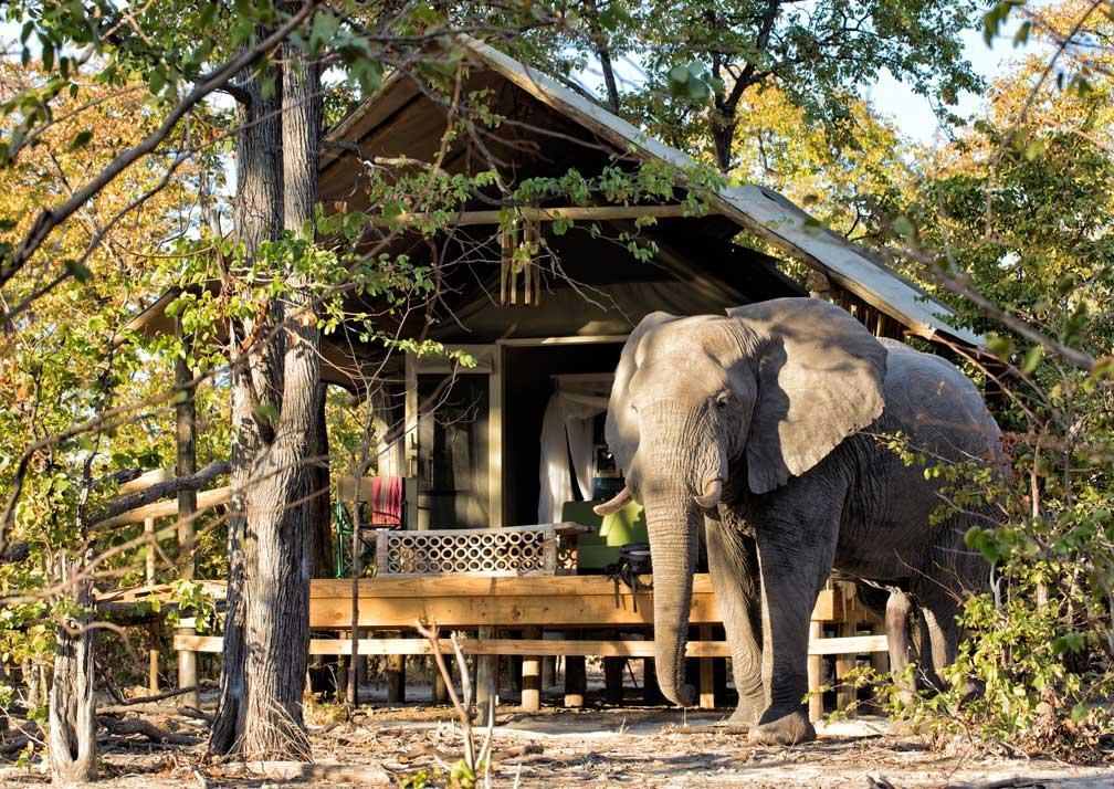 Hyena Pan cabin with elephant