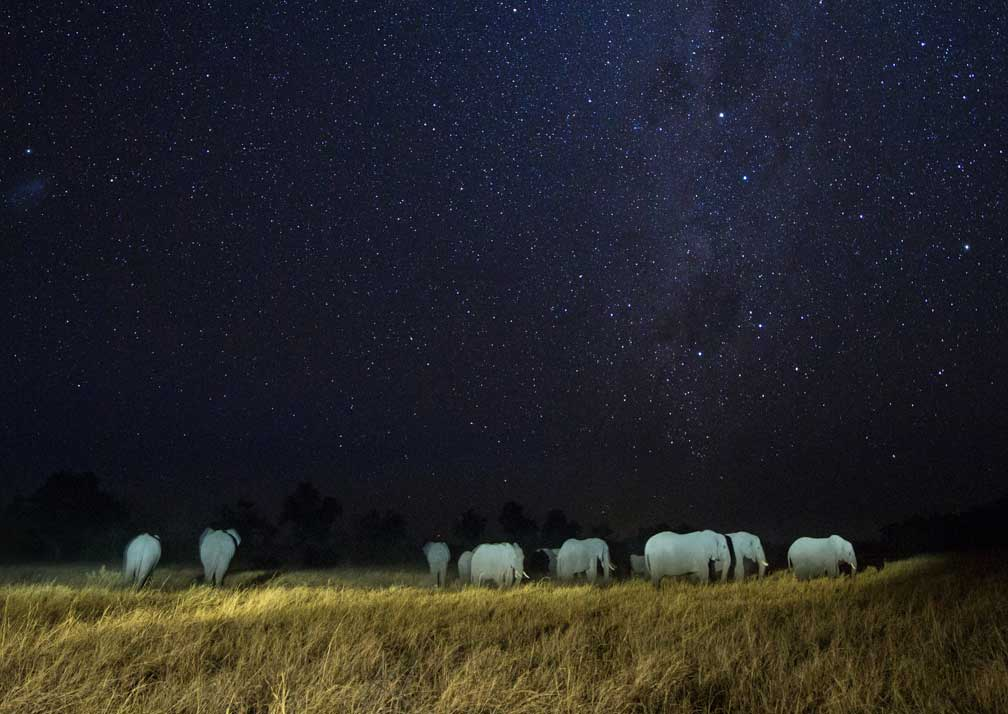 Little Machaba Camp elephants at night