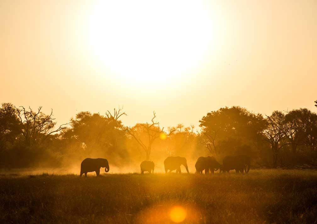Machaba Camp elephants at sunset
