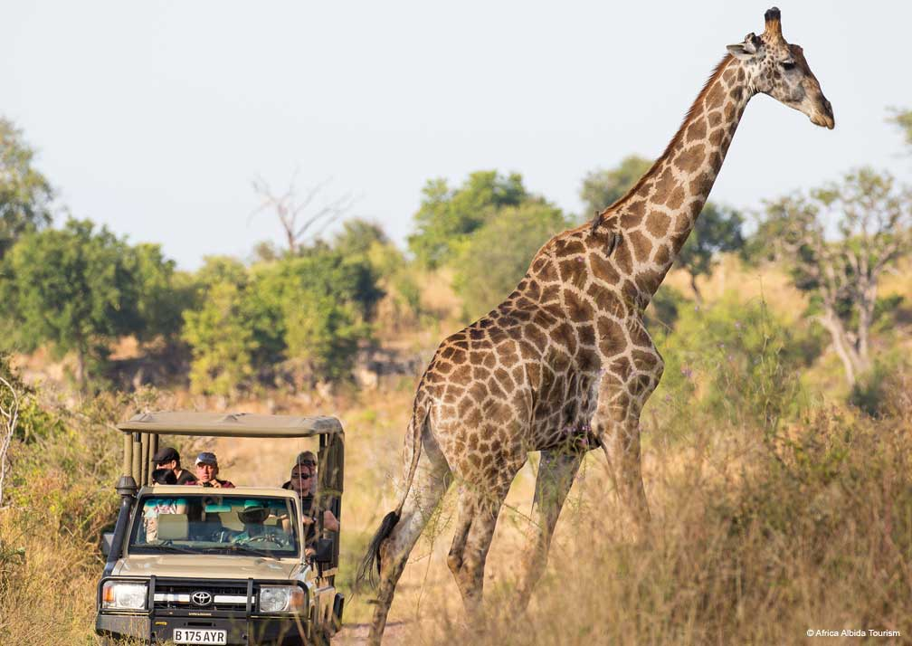 Ngoma Safari Lodge giraffe tour