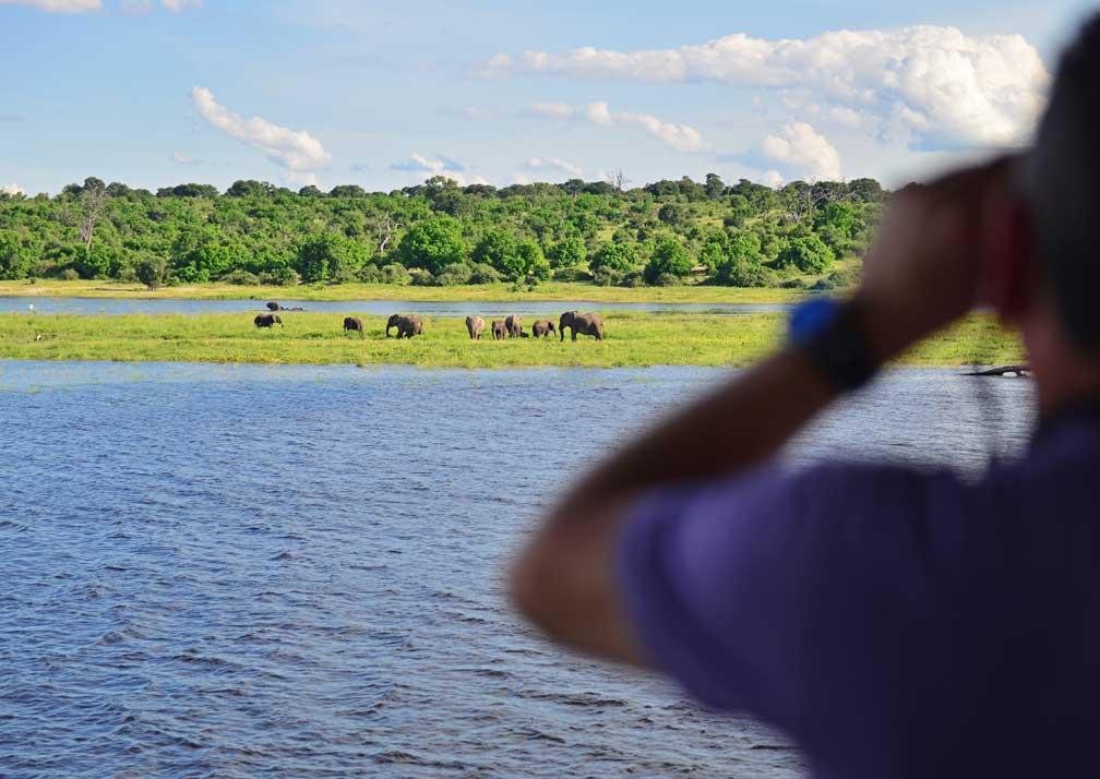 Zambezi Queen elephants 2