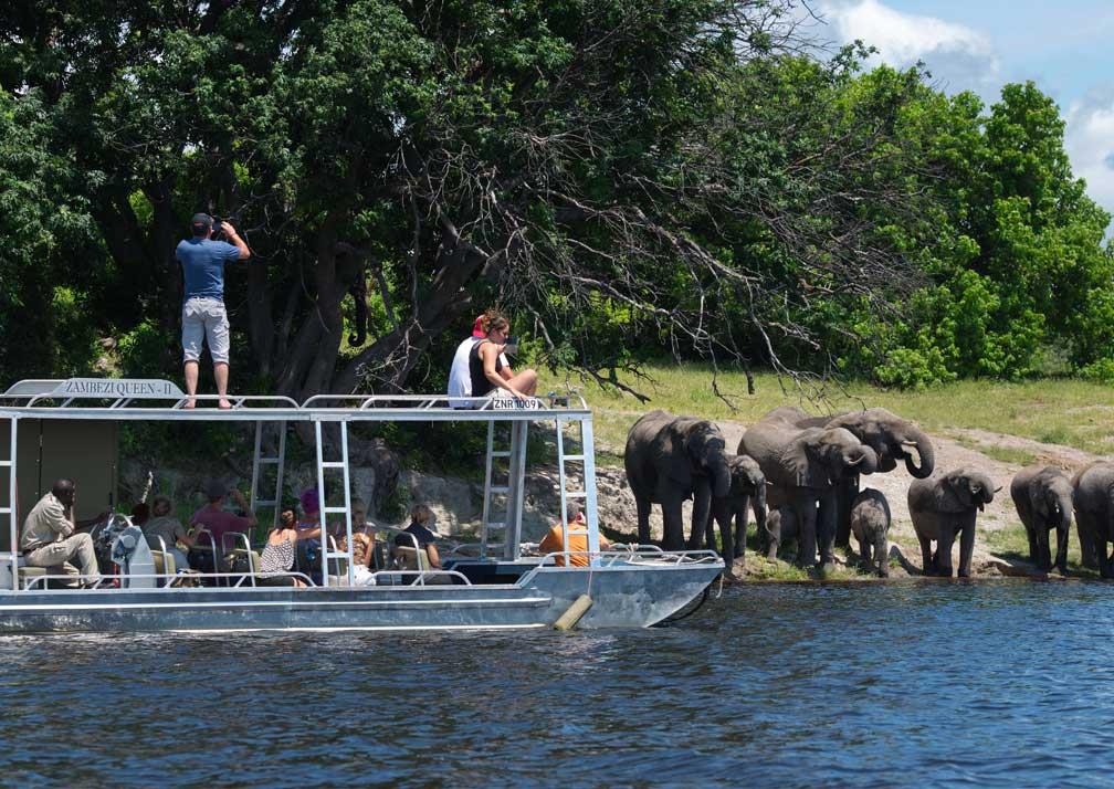 Zambezi Queen elephants