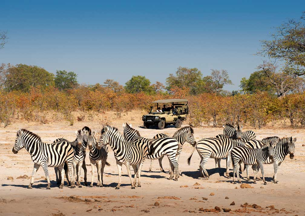 Linyanti Expeditions game drive